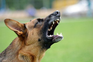Als fahrlässige Körperverletzung kann ein Hundebiss ebenfalls gelten.