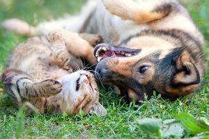 Der seelische Schmerz über ein verstorbenes Haustier zieht keinen Anspruch auf Schmerzensgeld nach sich.